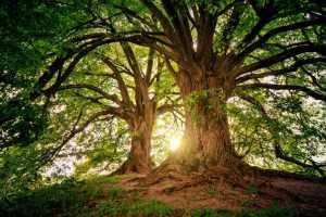 आनंदाचे झाड